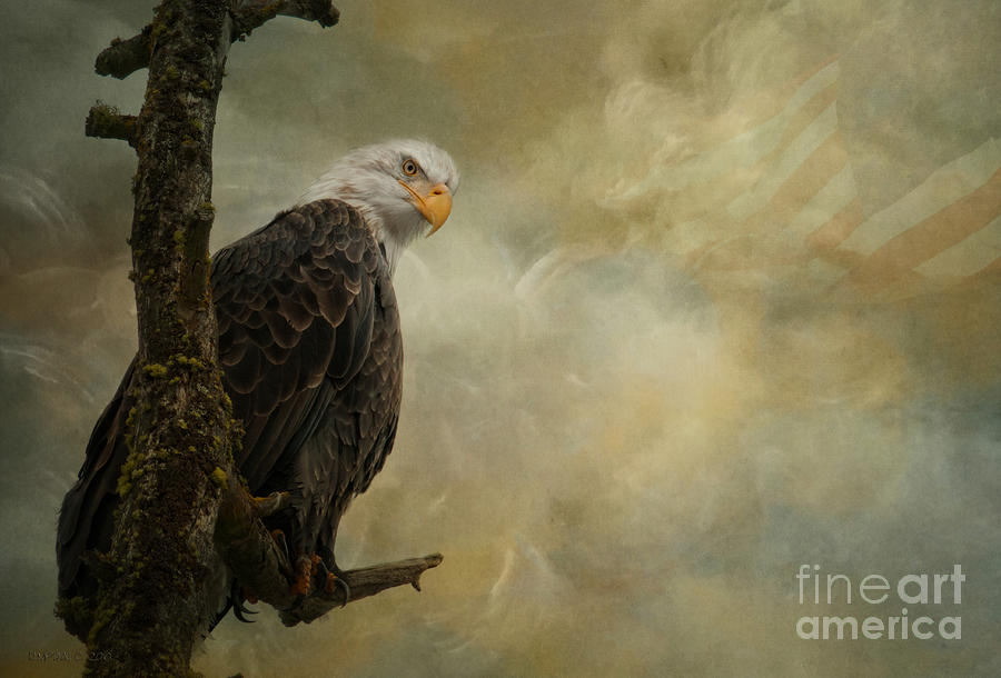 Call Of Honor Photograph  - Call Of Honor Fine Art Print