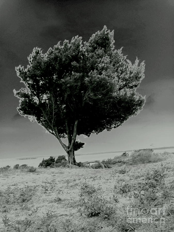 Stormy Tree Photograph - Calms by Amy Sorrell