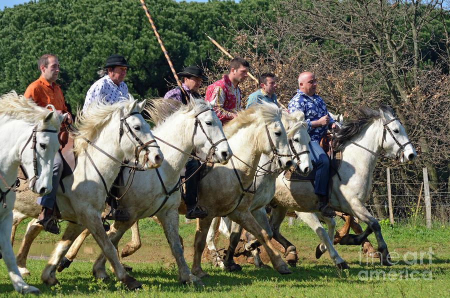 Camargue Cowboys Riding Horses Photograph