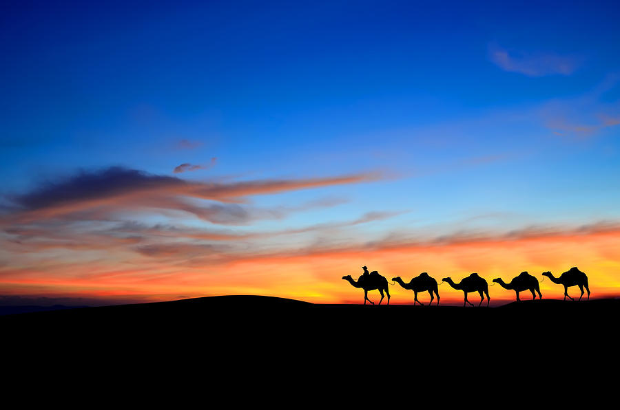 Camel Caravan In Desert Sunset Photograph by Kanoksak Detboon