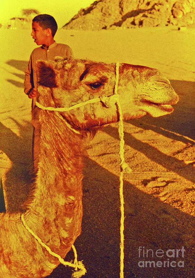 Camel Ride Photograph  - Camel Ride Fine Art Print