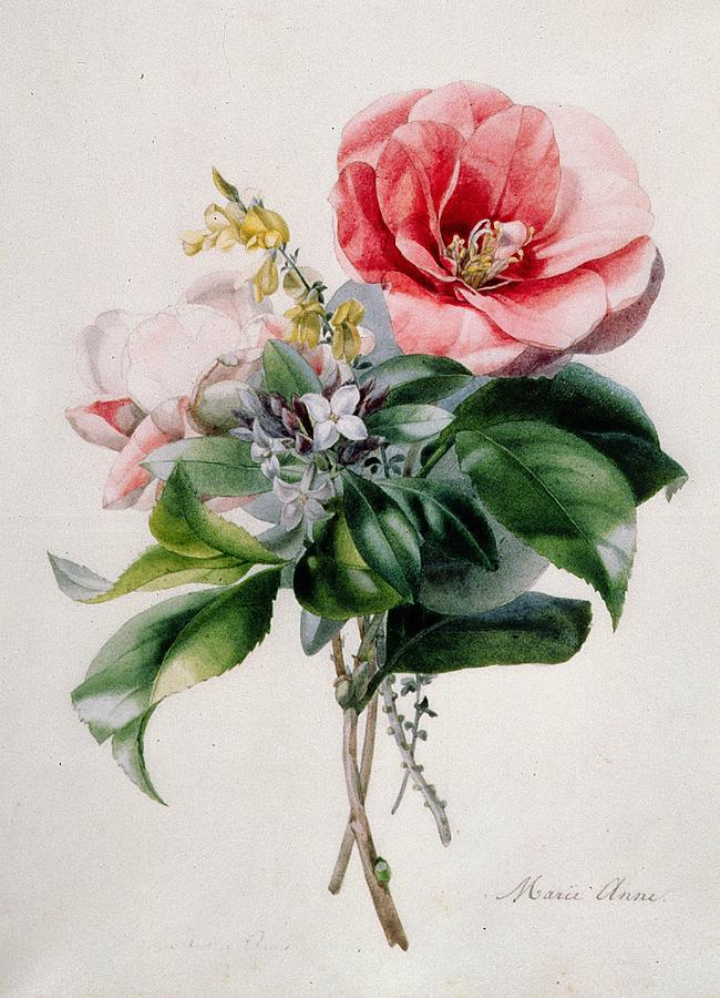Camellia And Broom Painting By Marie Anne