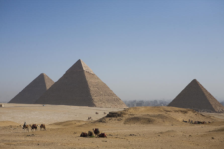 Camels At The Great Pyramids At Giza Photograph