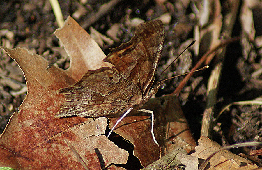 Camo Butterfly by Rick Friedle