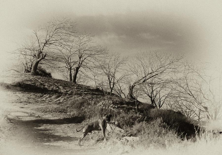 Campo Dog Photograph