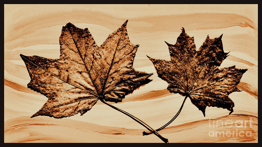 Photo Photograph - Canadian Leaf by Marsha Heiken