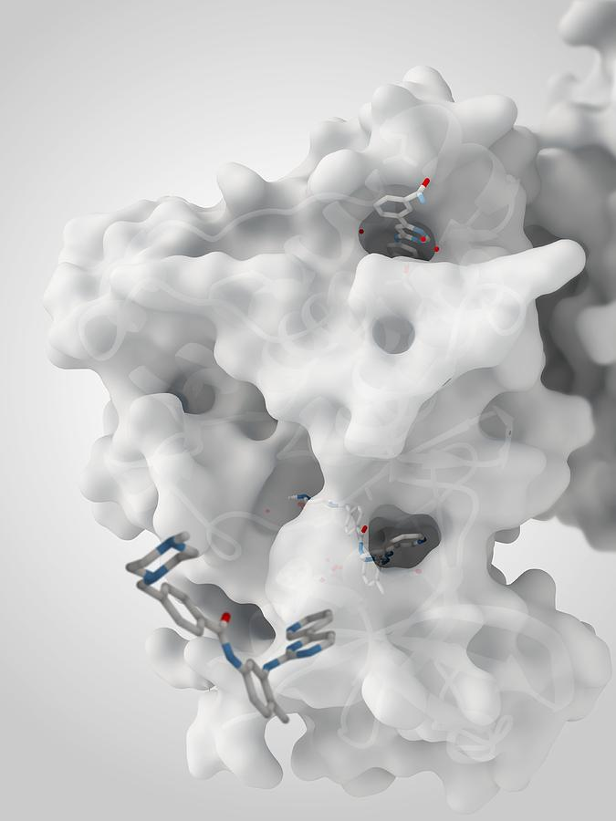 Molecule Photograph - Cancer Protein And Drug Complex by Ramon Andrade 3dciencia