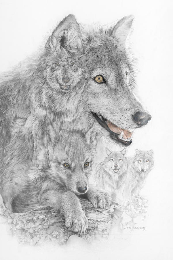 Canis Lupus V The Grey Wolf Of The Americas - The Recovery  Drawing  - Canis Lupus V The Grey Wolf Of The Americas - The Recovery  Fine Art Print