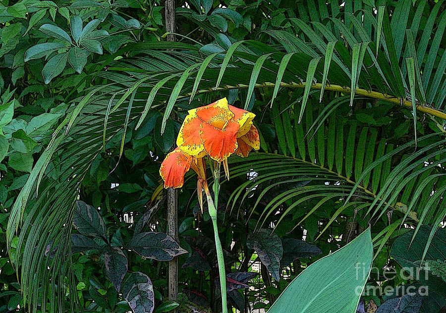 Canna 1 Photograph  - Canna 1 Fine Art Print