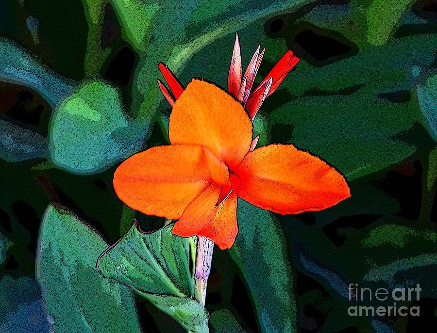 Canna 6 Photograph  - Canna 6 Fine Art Print