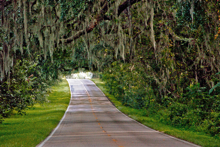 Visit the Canopy Roads - LEON COUNTY - Canopy Roads