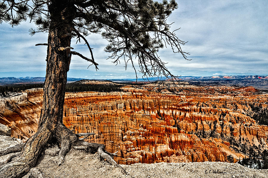 Canyon Overlook Photograph  - Canyon Overlook Fine Art Print