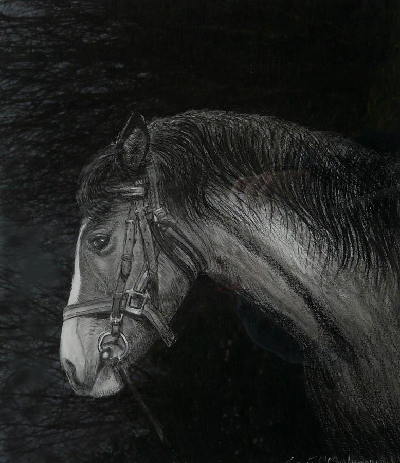 Capall Doracha Painting - Capall Doracha by Tomas OMaoldomhnaigh