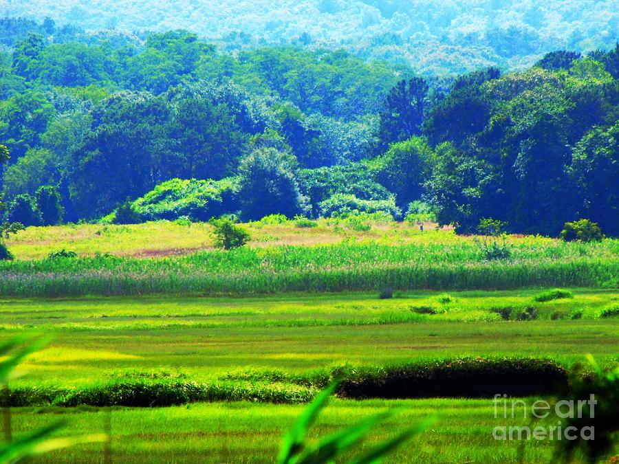 Cape Cod Marsh On A Hot Day Photograph