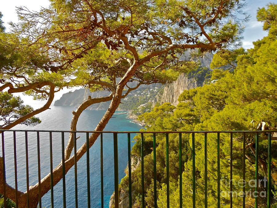 Capri Panorama With Tree Photograph  - Capri Panorama With Tree Fine Art Print