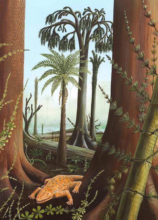 Tetrapod  Wikipedia