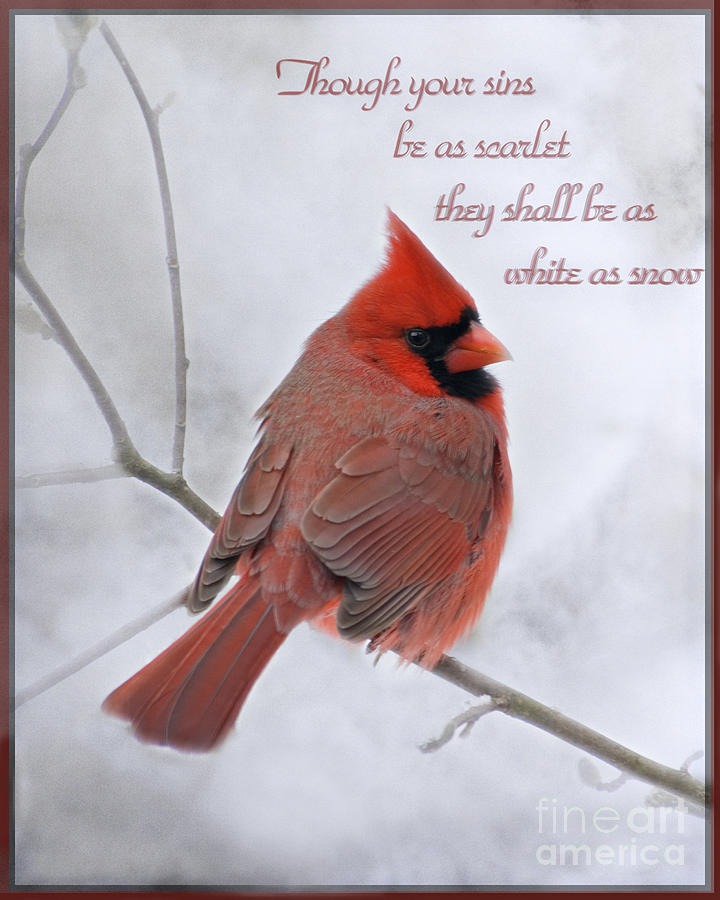 Male Digital Art - Cardinal In The Snow - D001540 by Tandem Designs