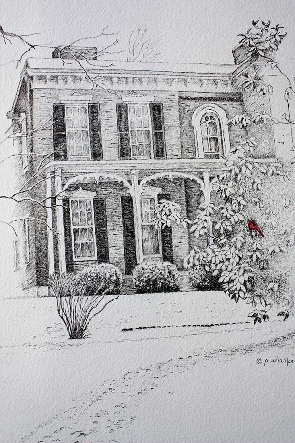 Historic Home Drawing - Cardinal by Patsy Sharpe