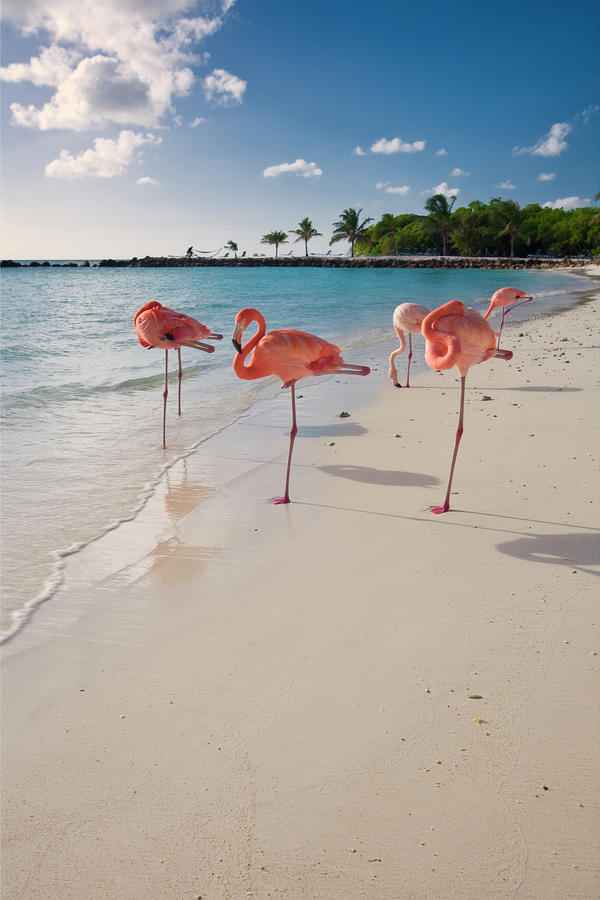 Caribbean Beach With Pink Flamingos Photograph