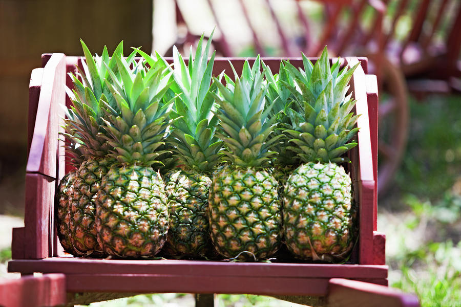 Cart Of Pineapples Photograph