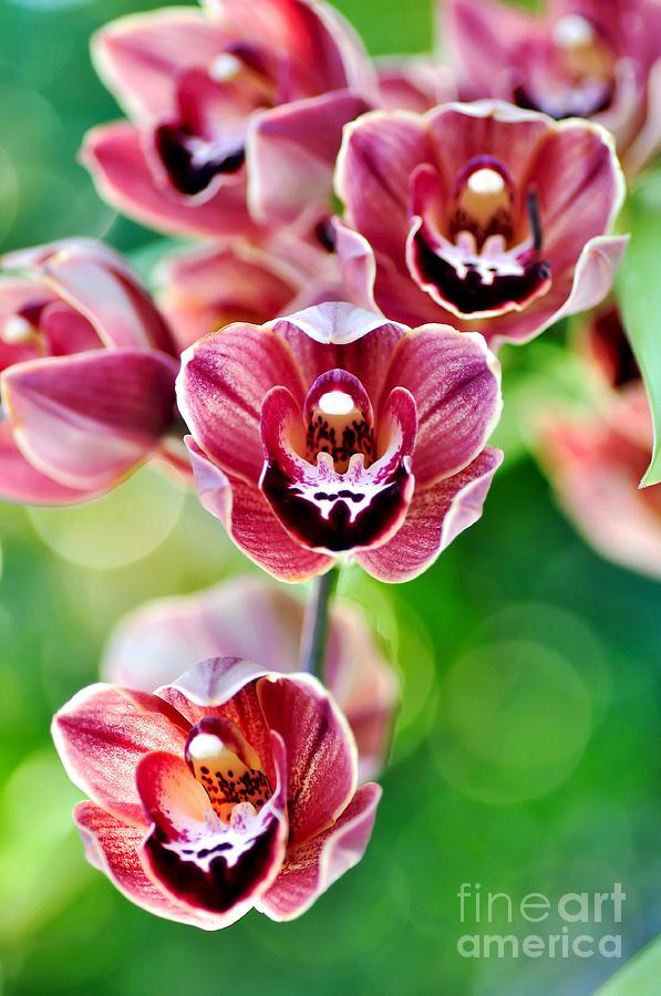 Cascading Miniature Orchids Photograph