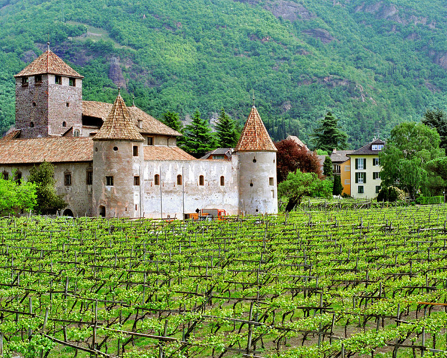 Castle And Vineyard In Italy Photograph