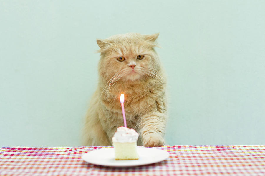 Cat About To Bllow A Candle Photograph