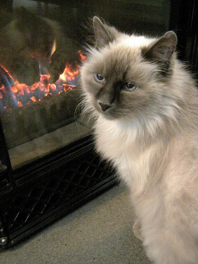 Cat Photograph - Cat And The Fireplace by Patricia Drohan