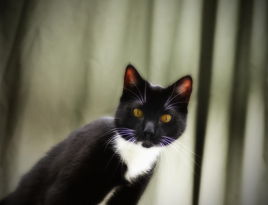 Cat Cat Photograph  - Cat Cat Fine Art Print
