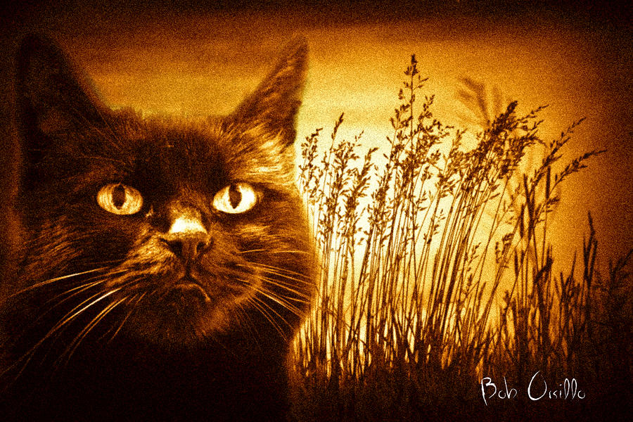 Cat Dreams Photograph  - Cat Dreams Fine Art Print