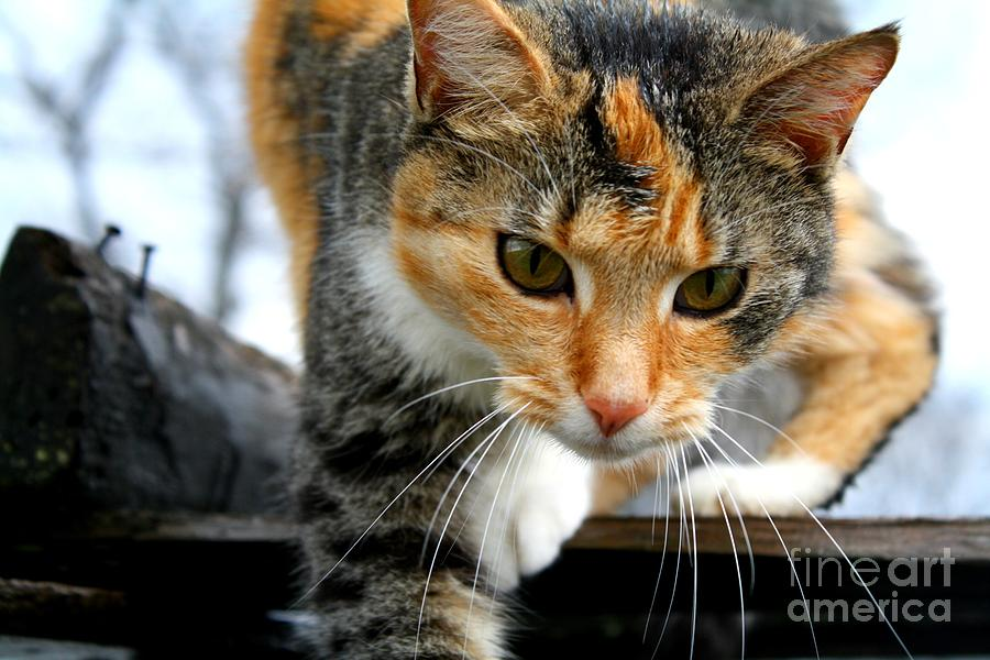 Cat Eyes And Whiskers  Photograph  - Cat Eyes And Whiskers  Fine Art Print