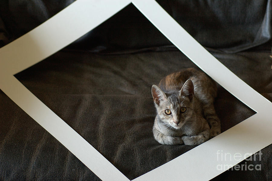 Cat In A Frame Photograph  - Cat In A Frame Fine Art Print
