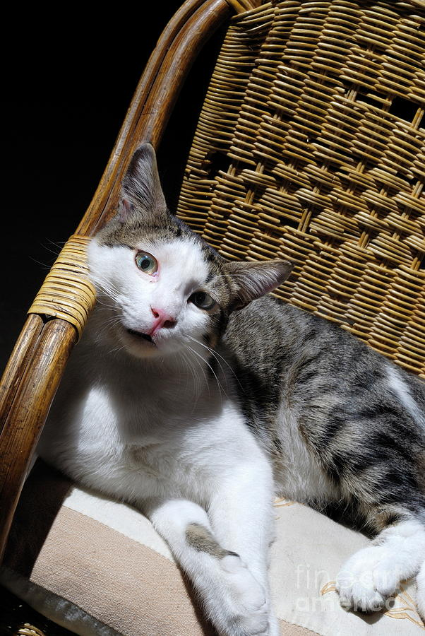Cat Lying On Wooden Children Chair Photograph