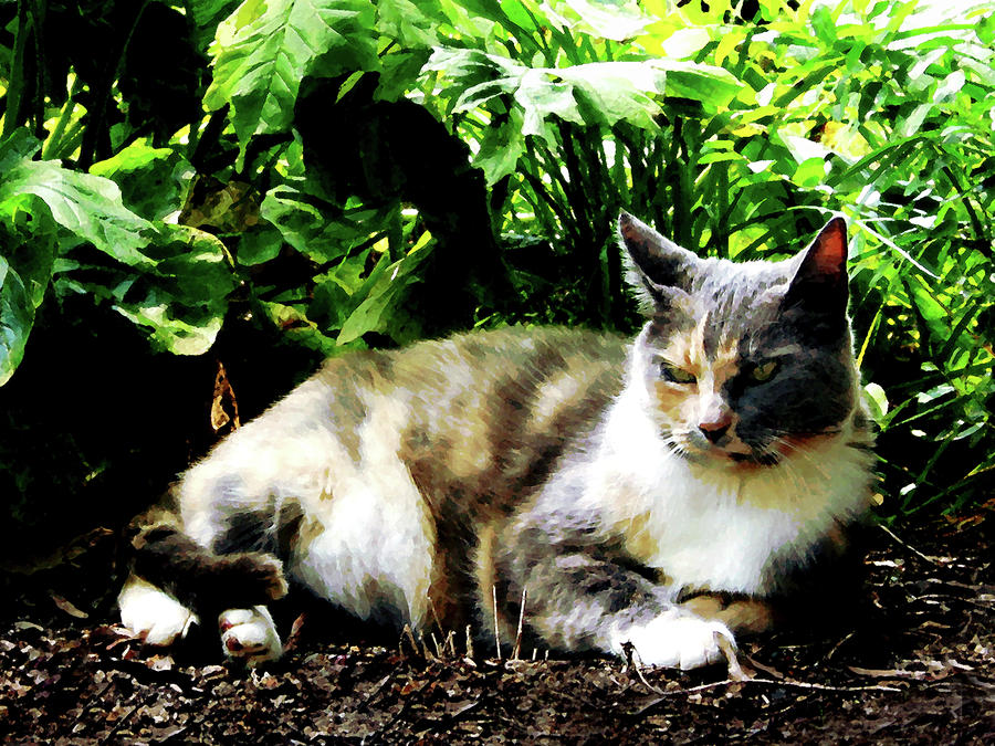 Cat Relaxing In Garden Photograph  - Cat Relaxing In Garden Fine Art Print