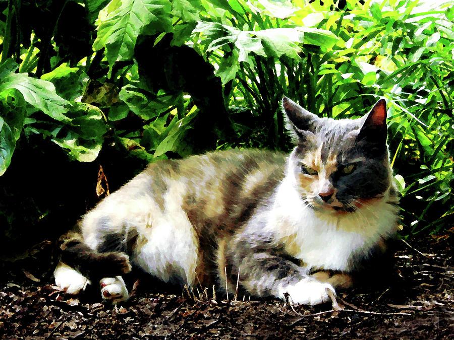 Cat Relaxing In Garden Photograph