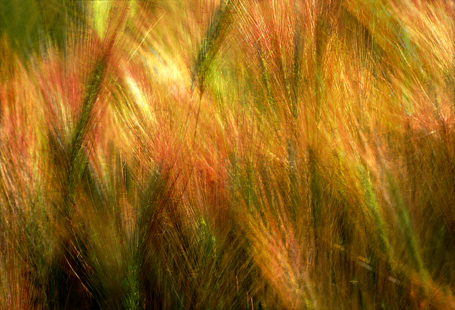 Cat Tails Photograph