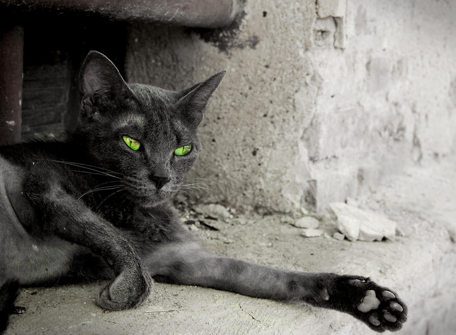 cat Photograph