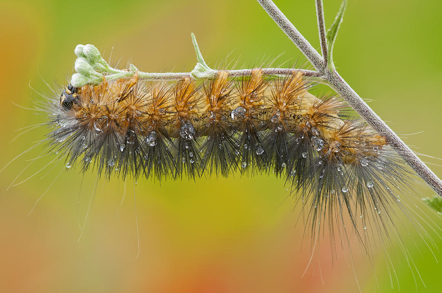 Caterpillar On A Rainy Day Photograph