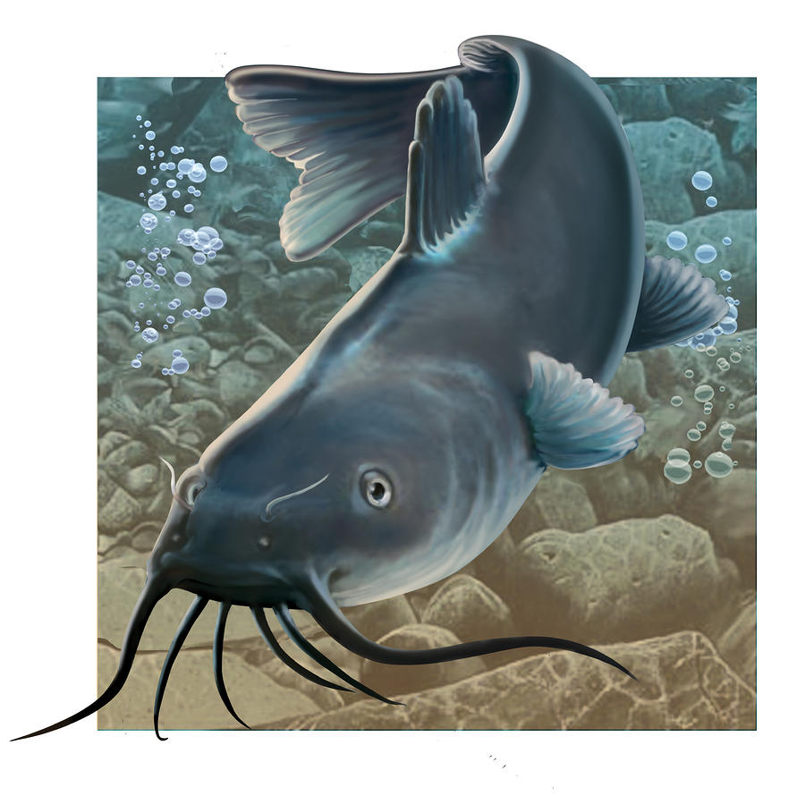 Catfish Digital Art  - Catfish Fine Art Print