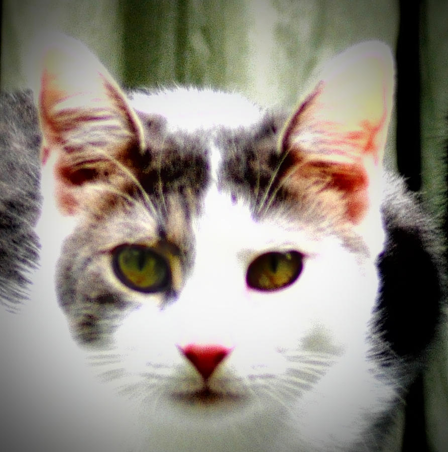 Cats Meow Photograph