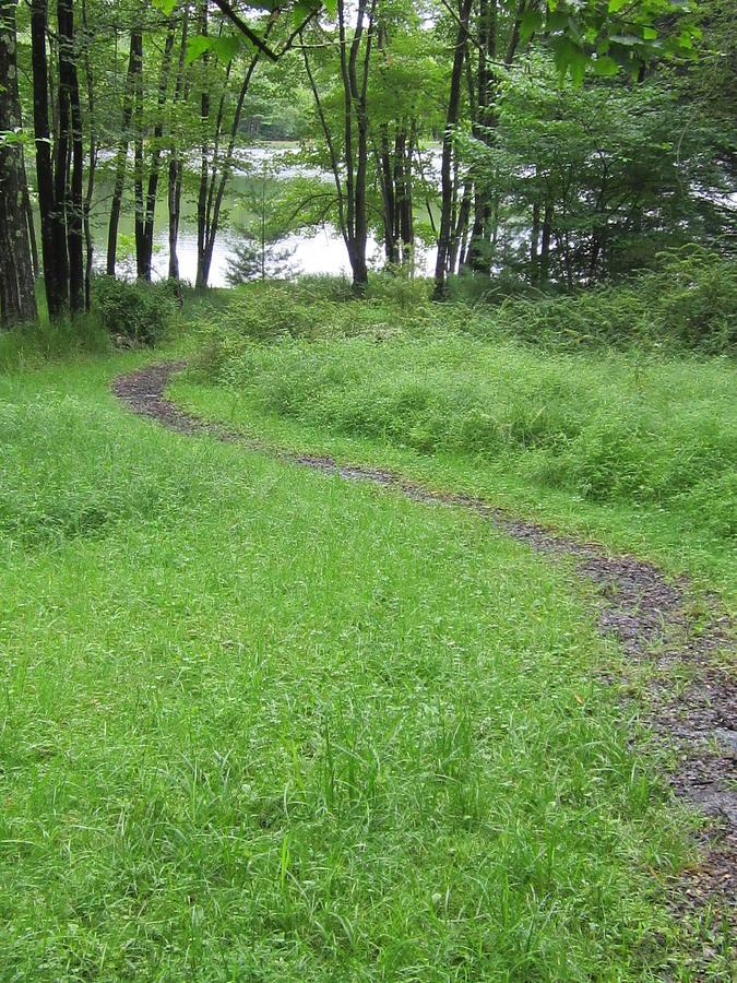Catskill Path Photograph