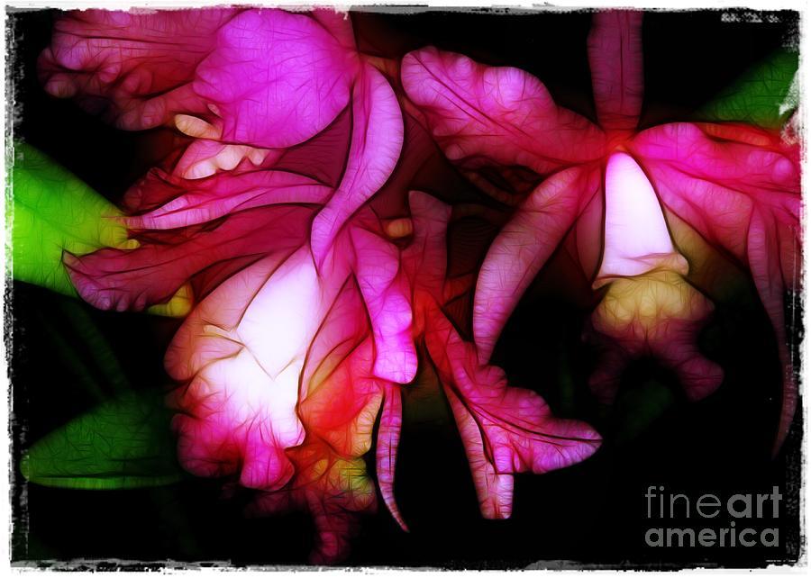 Cattleyas Photograph