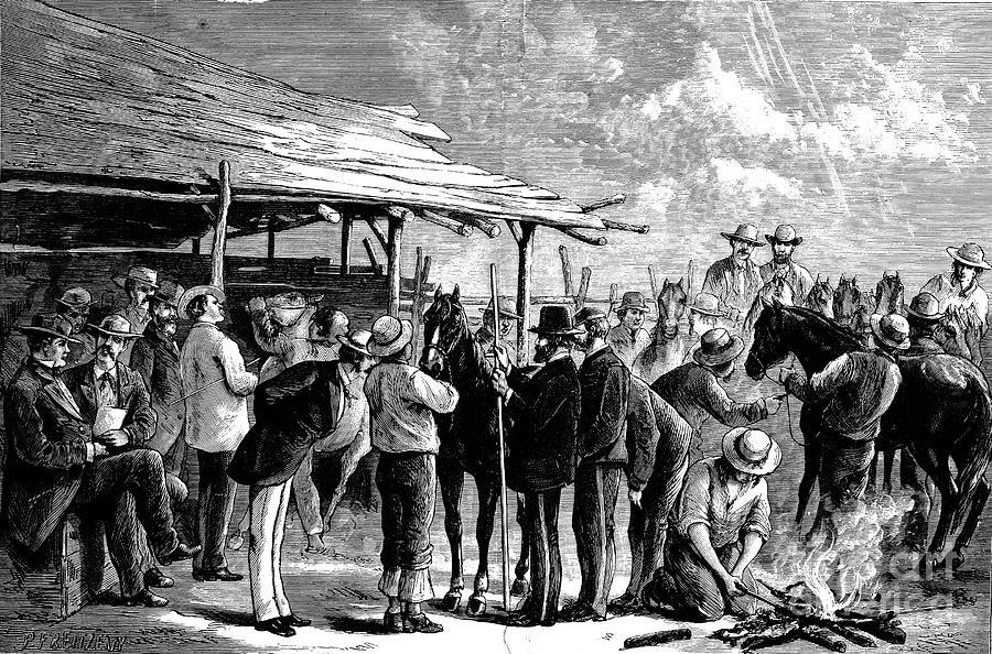 Cavalry Horses, 1876 Photograph