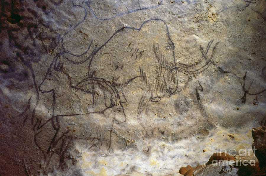 Cave Art - Mammoth And Ibexes Photograph  - Cave Art - Mammoth And Ibexes Fine Art Print