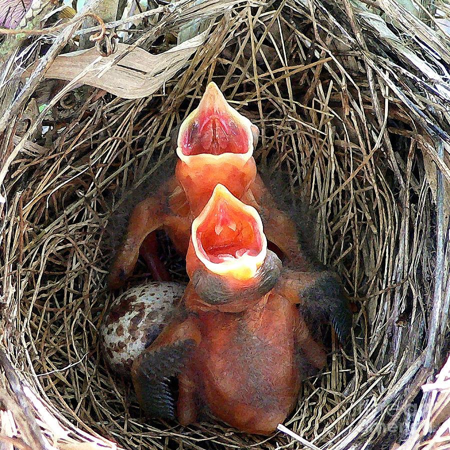 Cavernous Cardinals Photograph
