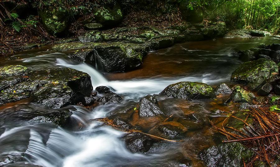 Cedar Creek Photograph By Mark Lucey