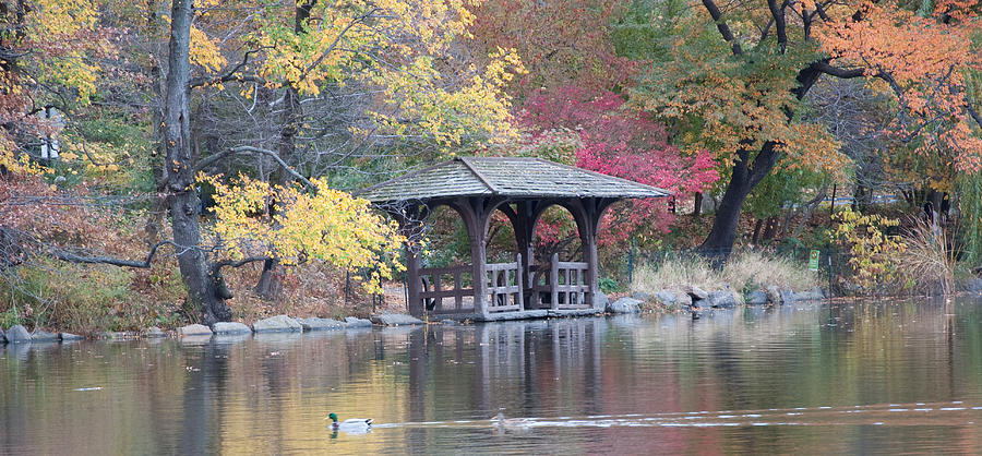 Central Park Lake Photograph  - Central Park Lake Fine Art Print