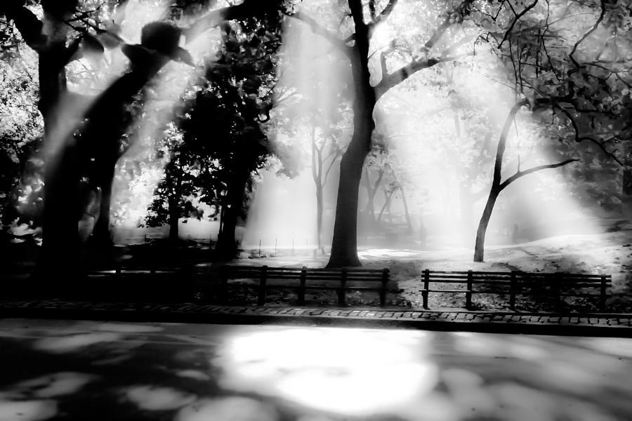 Central Park Ny Photograph