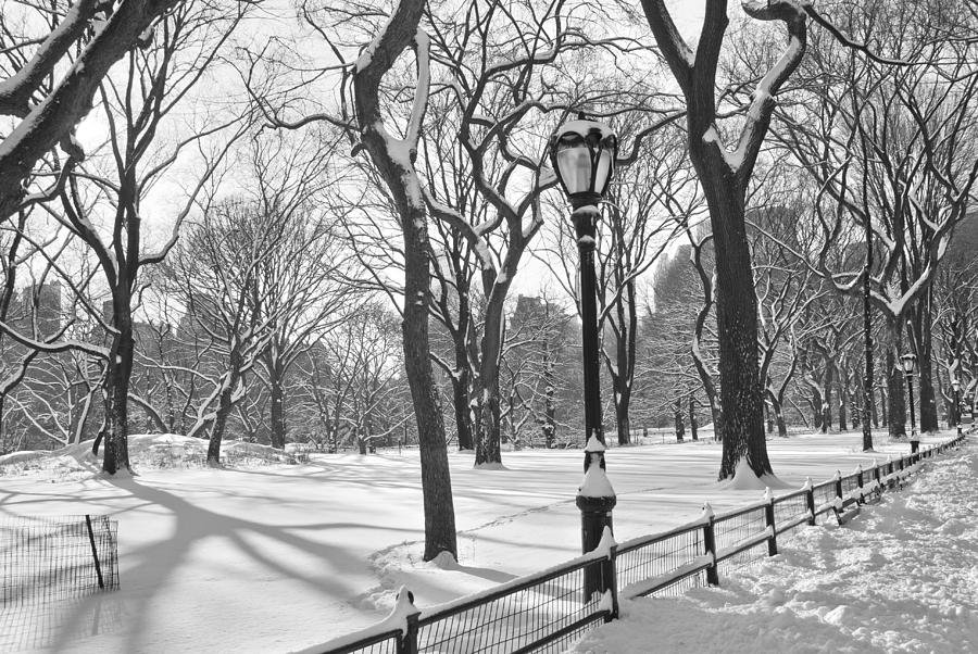 Central Park Snowfall Bw Photograph