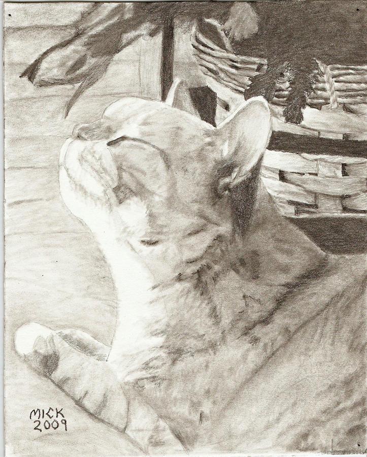 Illustration Pets Cats Art Still Life Drawing - Cepheus by Mick Hogan